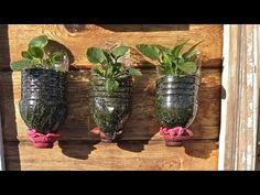 Grandes secretos y trucos de jardinería que te apuesto no conoces PARTE 1 - YouTube