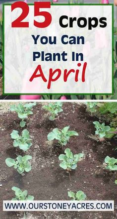 April Planting Guide – Zones 5 & 6 – What You Can Plant in April! - Home Garden DIY | 1004