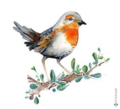 Chucao / Scelorchilus rubecula Little Red, Bird Art, Animal Drawings, Tatoos, Needlework, Photo Art, Flora, Birds, Graphic Design