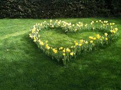 Spring daffodils in lawn. Dream Garden, Garden Art, Beautiful Gardens, Beautiful Flowers, Heart In Nature, I Love Heart, My Secret Garden, Daffodils, Daffodil Bulbs