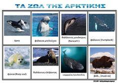 Το νέο νηπιαγωγείο που ονειρεύομαι : Τα ζώα της Αρκτικής - Πίνακες αναφοράς Harp Seal, Musk Ox, Polar Animals, Arctic, Kids Learning, Penguins, Preschool, Winter, Education