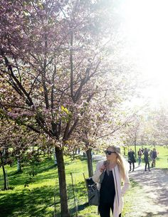 A'la Annn: Cherry Blossom Girl Cherry blossom in Helsinki, Finland. Cherry Blossom Girl, Helsinki, Finland, My Outfit, Pastel, Park, Coat, Plants, Outfits