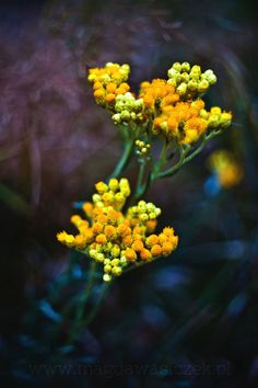 Yellow Dancers by Magda Wasiczek on 500px