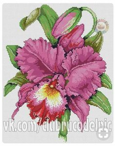 Flower orchid cross stitch.