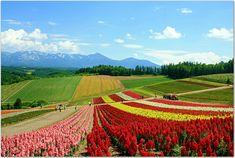 flower fields, Biei, Hokkaido