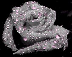 Love this photoshopped rose...