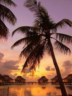 Maale, Maldives Copyright: Lucio Sassi