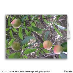 OLD FLORIDA PEACHES Greeting Card