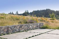 stone wall, concrete patio with Creeping Thyme in joints, set into native Northern California landscape.  Landscape architect Bernard Trainor