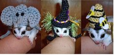 Tiny pet hat for Sugar Glider, Ferret, Guinea Pig, Rat, small rodent -Humorous -made to order