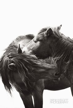"""""""Kisses"""" from Drew Doggett's Discovering the Horses of Sable Island collection."""