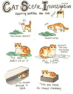 Cat Scene Investigation: Starring Waffles the cat =^..^=  ~Inge~ @ http://www.facebook.com/ComicsFantasy & http://www.facebook.com/groups/ArtandStuff