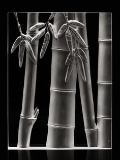 Bamboo Forest by Steuben on Gilt.com