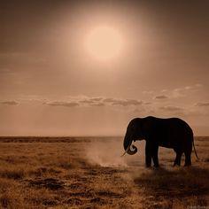 llbwwb:  Elephant Sun (by Rob Dweck)