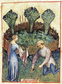 Harvesting asparagus that is bound in a wattle fence. She is wrapping it in a towel.