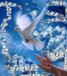 """""""But the Counselor, the Holy Spirit, whom the Father will send in my name, will teach you all things, and will remind you of everything I have said to you. Beautiful Family, Beautiful Birds, Beautiful Pictures, Corazones Gif, Dove Images, Religious Photos, Tribe Of Judah, Peace Dove, Bible Prayers"""