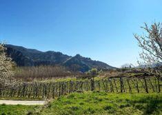 Wandern am Panoramaweg Rossatz   Wachau Inside Vineyard, Outdoor, Hiking, Vacation, Viajes, Pictures, Outdoors, Vine Yard, Vineyard Vines