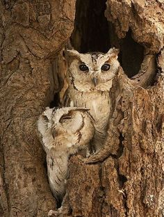 two is better than one #owls