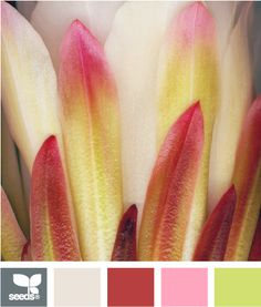✯ Petal Tones - Great Spring Colors - the Grey makes a Great Accent Color