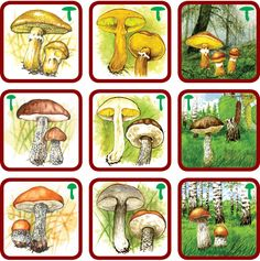 Forest Theme, Montessori Materials, Diy Toys, Trees To Plant, Card Games, Science, Homeschool, Stuffed Mushrooms, Teaching