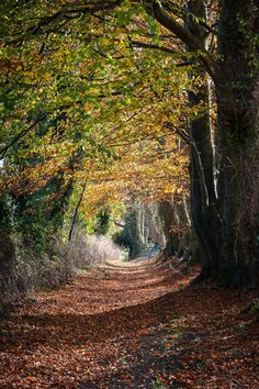 Autumn Pathway of Pathways, Landscape Photography, Landscapes, Country Roads, David, Autumn, Paisajes, Scenery, Fall