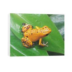 Bastimentos Pumilio Dart Frog with Clutch Horizontal Canvas  Rachel Jensen Designs