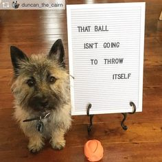 Funny Animal Photos, Funny Animals, Animal Funnies, Lettering, Funny Pictures Of Animals, Animal Humor, Animal Jokes, Funny Animal, Drawing Letters
