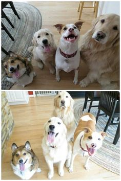 Guess which one misses being the only dog...
