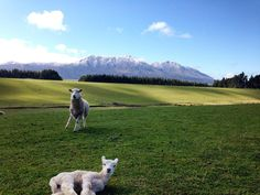 Lambing time by willy.brown