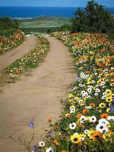 Langebaan Naturpark, sagenhaftes Blumenmeer