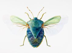 Green Stink Bug - insect, stink bug, beetle by Dinah Wells Beetle Insect, Insect Art, Bug Insect, Cool Insects, Bugs And Insects, Textiles Sketchbook, Stink Bugs, Cool Bugs, Bug Art