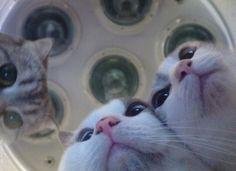 Catasters
