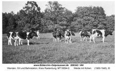 Wenden, Weidegarten mit Kühen