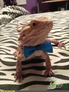 Bearded Dragon - they get big and awesome, not too hard to care for, and what they lack in cuteness they make up for in friendliness.