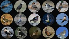 Tunnistatko Suomen yleisimmät linnut? Watch V, Decorative Plates, Bra, Nature, Youtube, Naturaleza, Bra Tops, Nature Illustration, Off Grid