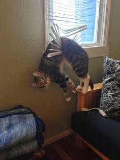 Hung up?    #animals