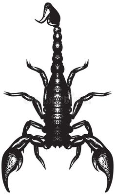 Illustration about Nice vector black and white realistic scorpion. Simple black shape isolated on white background. Illustration of black, astronomy, claw - 9696790