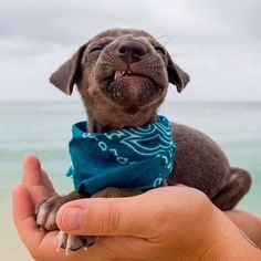 In case you need a happiness boost right now... Say hi to Earl Grey! He's one of our most recent @sgtpeppersfriends rescues and will be up for adoption soon ______________________________________________________ We are planning a very special @109world mission trip to @island.yoga in Aruba this January with all proceeds going to build Sgt Pepper's Friends Home; a shelter we desperately need to save even more dogs and cats in need. Who's excited for a week of YOGA and PUPPIES? Seriously!!...