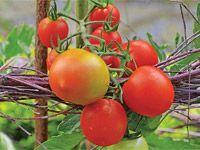 Prstence a obelisky: Nevšední opory pro rostliny vyrobíte z větví a proutků