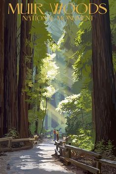 Muir Woods National Monument at FramedArt.com