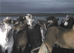 Tim Flach horses
