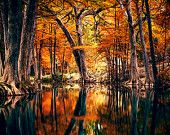 Texas Guadalupe River Landscape Photography - Autumn Foliage - Cypress Trees - Nature - Hill Country