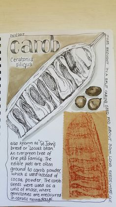Mom's Nature Journal inspiration Artist Journal, Nature Study, Nature Journal, Seed Pods, Finding Peace, Journal Pages, Journal Inspiration, Food Art, Mom