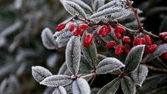 Fall Photos, Nature Photos, Online Image Editor, Winter Magic, Plant Pictures, Winter Is Coming, Country Christmas, Flower Photos, Trees To Plant