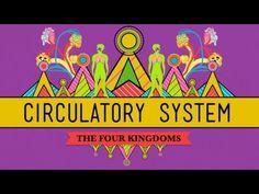 Week 8 & 10: Circulatory & Respiratory Systems - CrashCourse Biology #27