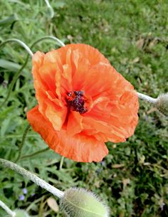Poppy: Around the neighborhood. #Poppy
