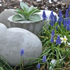 Learn how easy it is to make these architectural concrete garden orbs from VRAI Magazine's Contributing Editor, Charlotte Smith.