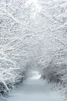 Snowy winter scene.