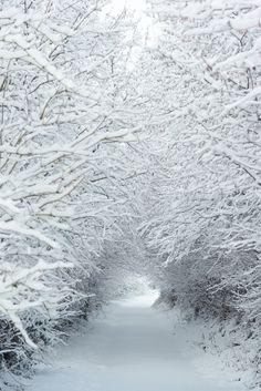 snow tunnel...