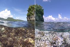 A before and after image of coral bleaching in American Samoa. The first image was taken in December 2014, the second in February 2015.